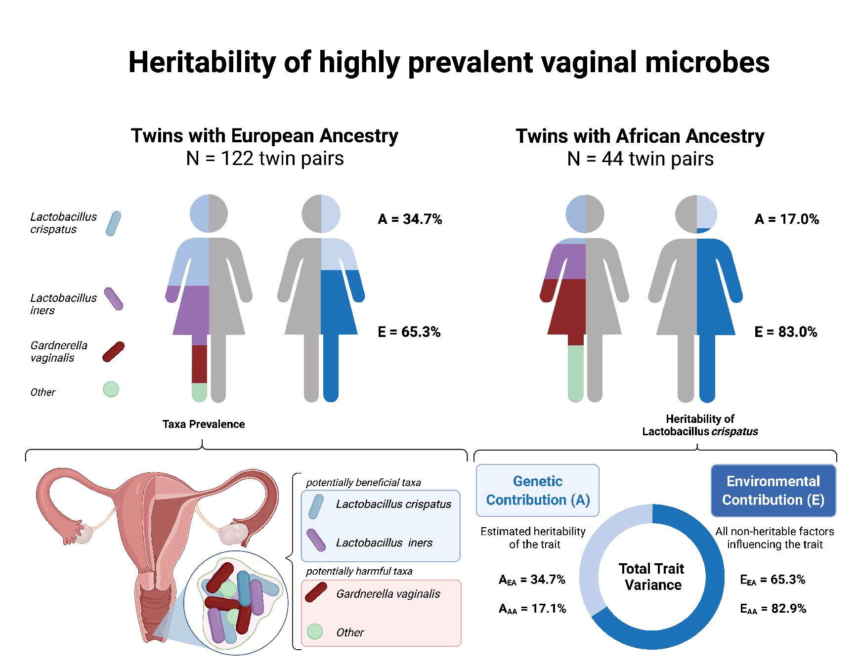 Heritability of highly prevalent vaginal microbes